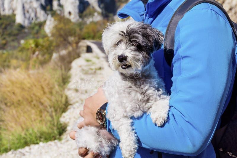 Zakończenie biały pies w mężczyzna uściśnięciach obrazy stock