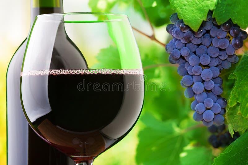 Czerwone wino i winogrona zdjęcie royalty free