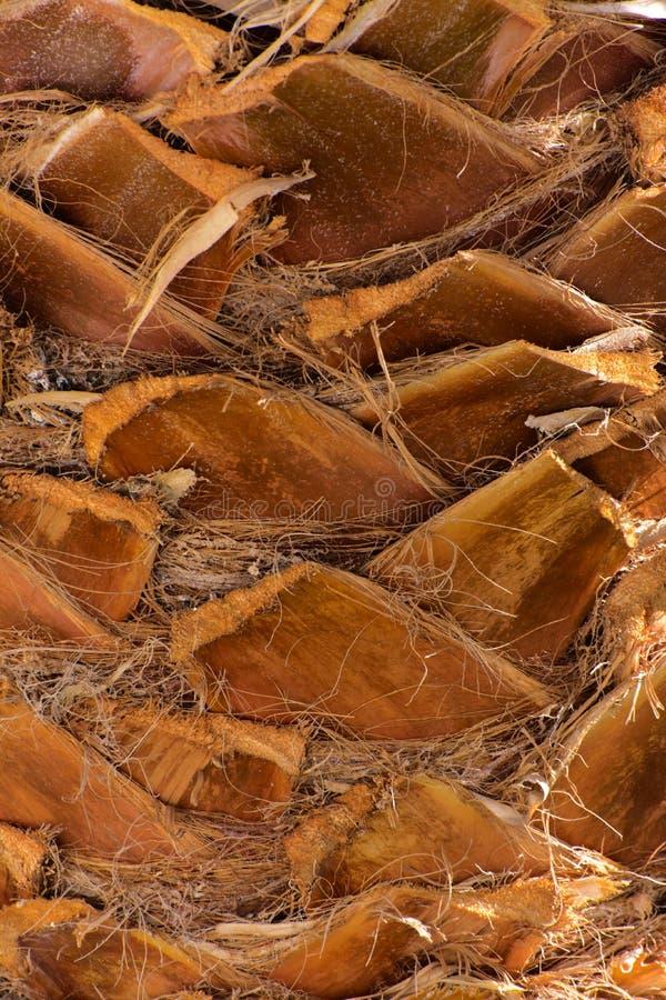 Zakończenie czerepy barkentyna drzewo w chaotycznym abstrakcjonistycznym projekcie fotografia royalty free