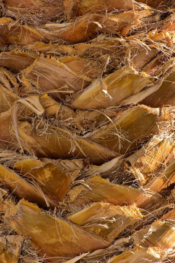 Zakończenie czerepy barkentyna drzewo w chaotycznym abstrakcjonistycznym projekcie zdjęcie royalty free