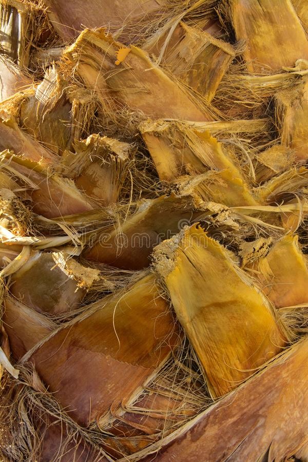 Zakończenie czerepy barkentyna drzewo w chaotycznym abstrakcjonistycznym projekcie fotografia stock