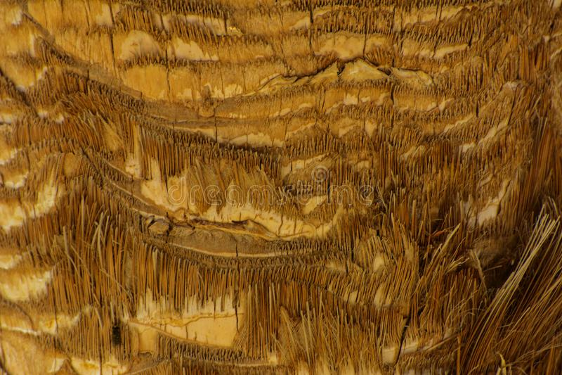 Zakończenie czerepy barkentyna drzewo w chaotycznym abstrakcjonistycznym projekcie zdjęcia stock