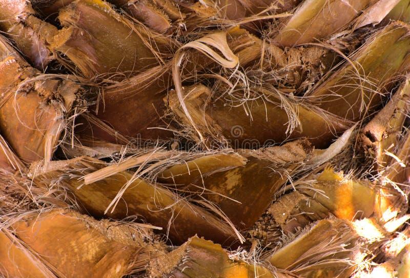 Zakończenie czerepy barkentyna drzewo w chaotycznym abstrakcjonistycznym projekcie obrazy stock