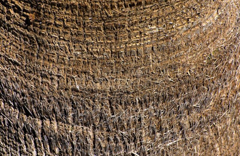 Zakończenie czerepy barkentyna drzewo w chaotycznym abstrakcjonistycznym projekcie zdjęcie stock