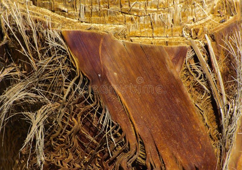 Zakończenie czerepy barkentyna drzewo w chaotycznym abstrakcjonistycznym projekcie obraz stock