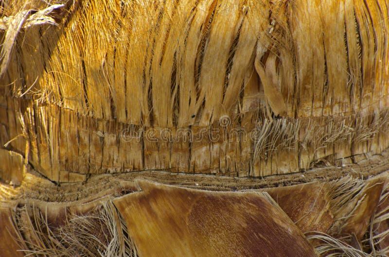 Zakończenie czerepy barkentyna drzewo w chaotycznym abstrakcjonistycznym projekcie obraz royalty free