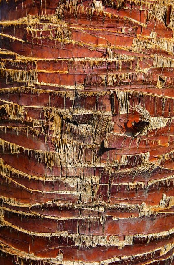 Zakończenie czerepy barkentyna drzewo w chaotycznym abstrakcjonistycznym projekcie obrazy royalty free