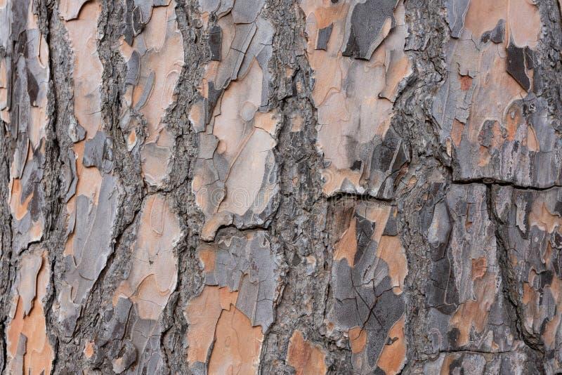 Zakończenie drzewna barkentyna obrazy stock