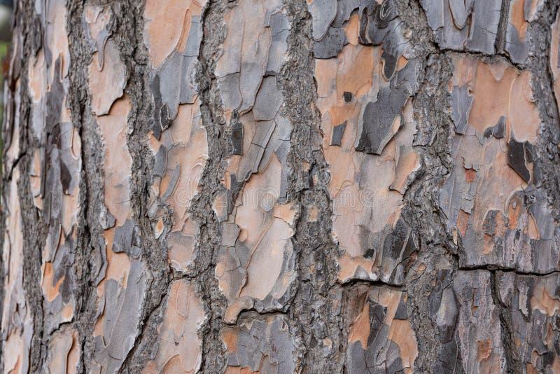 Zakończenie drzewna barkentyna zdjęcia stock