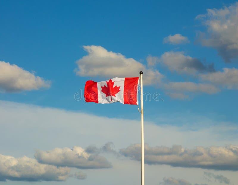Zakończenie kanadyjski chorągwiany trzepotać w sztywnym popióle fotografia royalty free