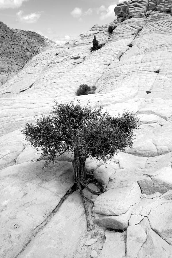 zakończenie kołysa małego drzewa mały obraz royalty free