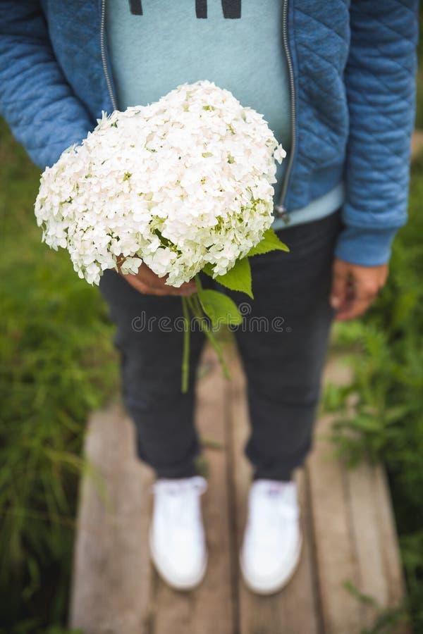 Zakończenie kobiety ` s ręka trzyma pięknego białego hortensja kwiatu najlepszy widok obraz stock
