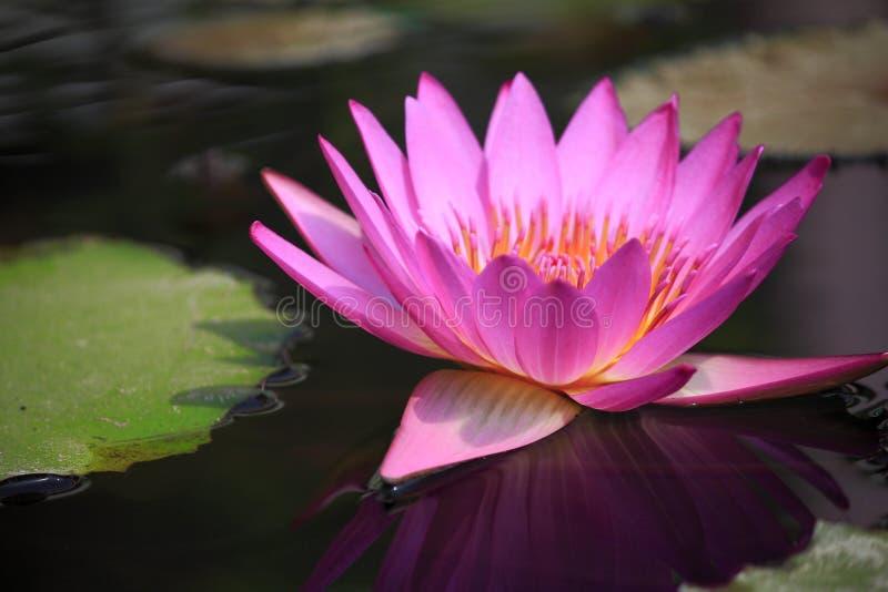 Zakończenie kwiatu sedno zdjęcia stock