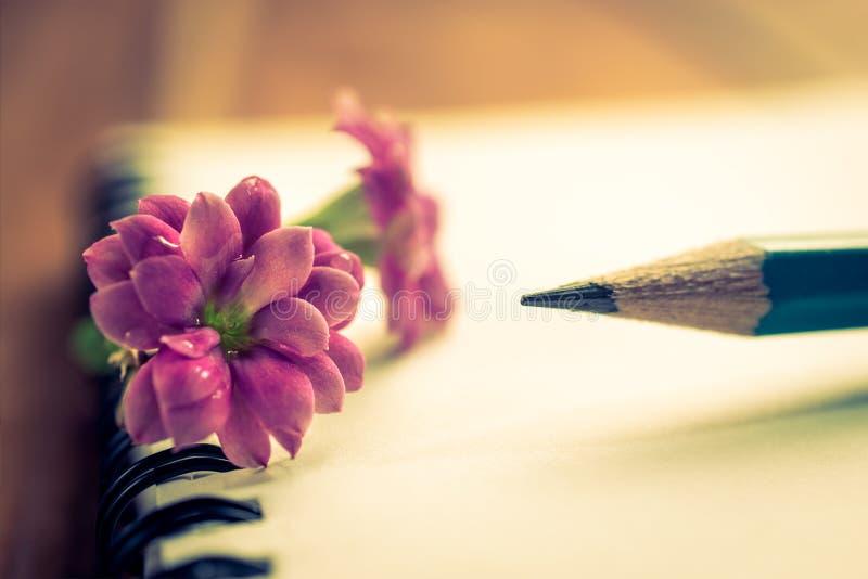 zakończenie menchie up kwitną, ołówek i notatnik na drewno stole obrazy stock