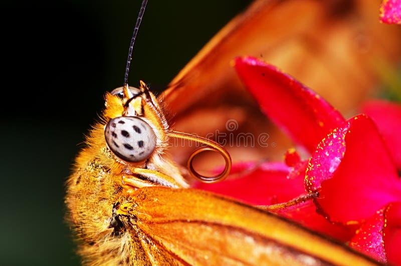 Zakończenie motyl obrazy stock