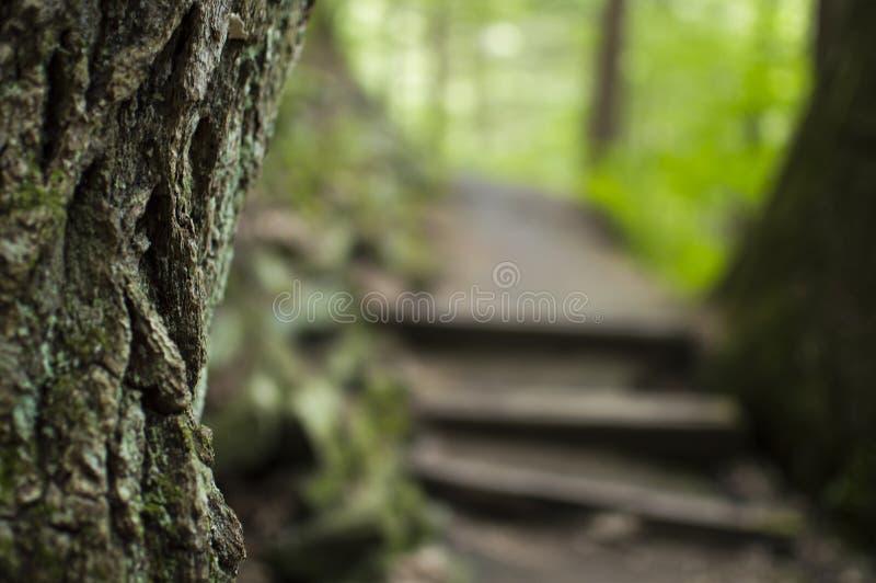 zakończenie na drzewie z lasową ścieżką i schodkami w tle fotografia stock