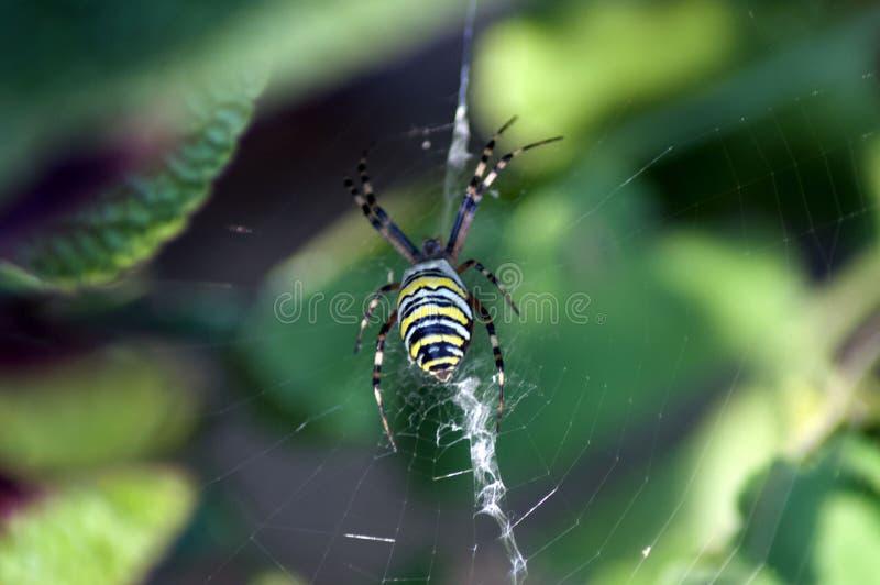 Zakończenie pająk w pająk sieci zdjęcia royalty free