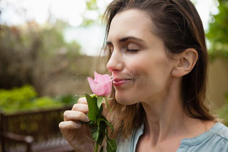 Zakończenie piękna kobieta z oczami zamykającymi wąchający menchii róży zdjęcie royalty free