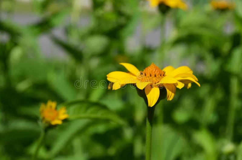 Zakończenie piękny i jaskrawy kwiat obraz stock
