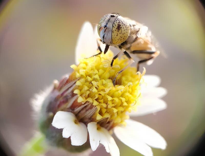Zakończenie pszczoła obrazy stock