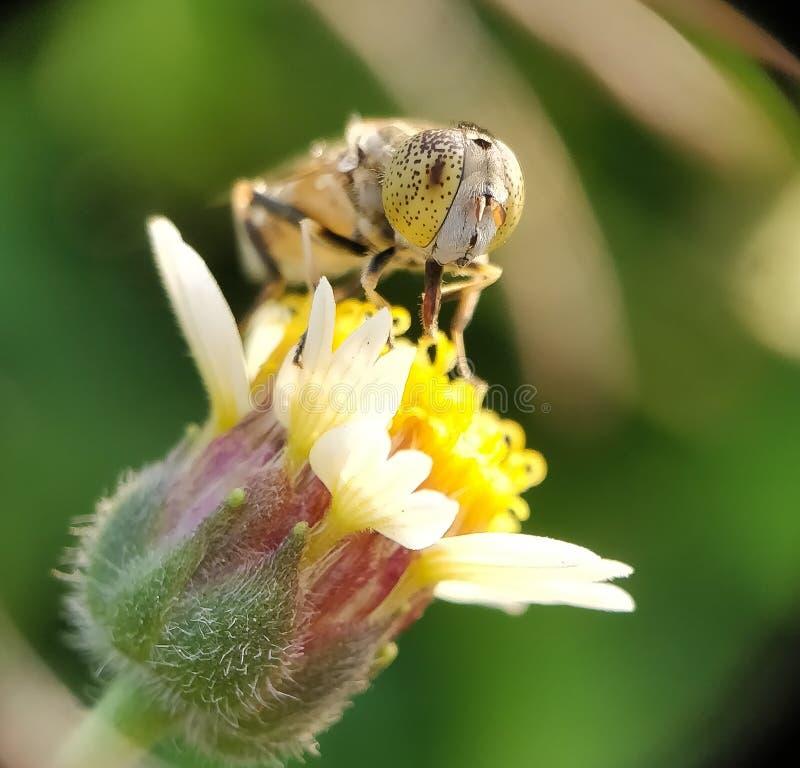 Zakończenie pszczoła fotografia stock