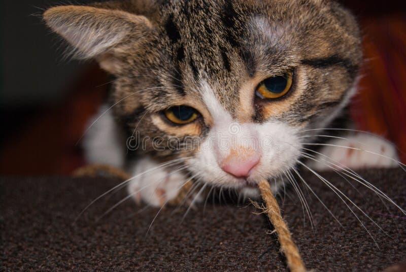 Zakończenie szczeniaka kota dysza zdjęcia royalty free