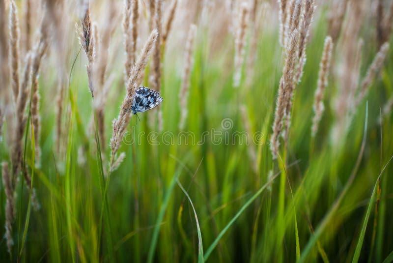 Zakończenie trawy pole up kwitnie przy zmierzchu światłem kolorowy natury tło z motylem obraz stock