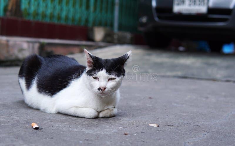 Zakończenie up bezdomny kot nieatutowy przed starym budynkiem w Tajlandia Osamotniony kot kłaść puszek na bocznym spacerze fotografia stock