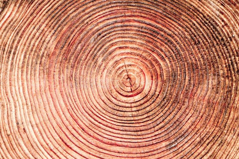Zakończenie up cięcie drzewo zdjęcie royalty free