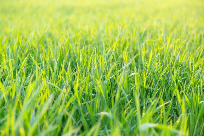 Zakończenie up popiera zaświecającego zielonej trawy niskiego kąt zdjęcie stock