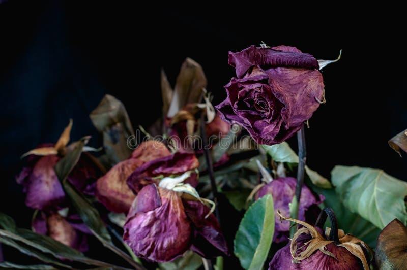 Zakończenie up wiązka nieżywe róże przeciw czarnemu tłu fotografia royalty free