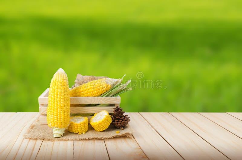 Zakończenie w górę świeżej natury kukurudzy na konopie worku i drewno boksujemy na drewnianym flo obraz stock
