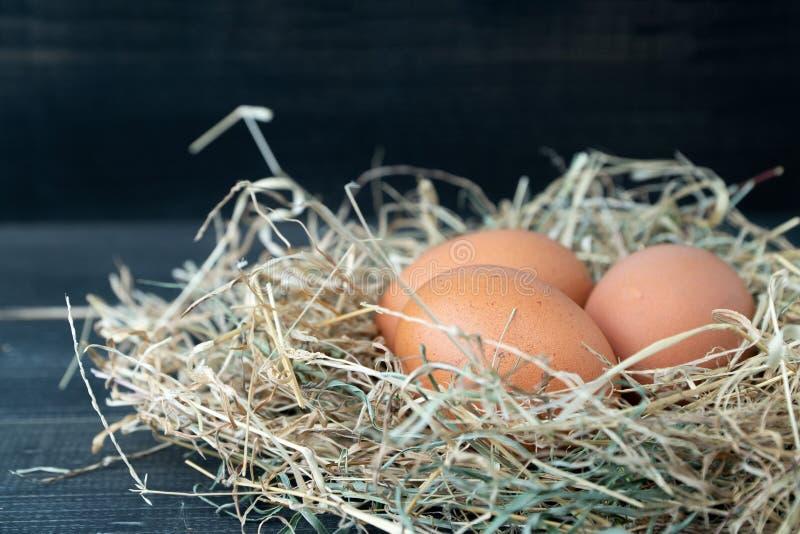 Zakończenie w górę świeżych brązu kurczaka jajek w siana gniazdeczku na czarnym drewnianym tle Pojęcie organicznie jajka, bezpłat obraz royalty free