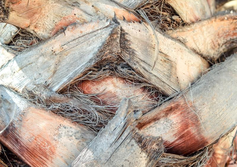 Zakończenie w górę bagażnika drzewko palmowe powierzchni tła tekstury wzór obrazy stock