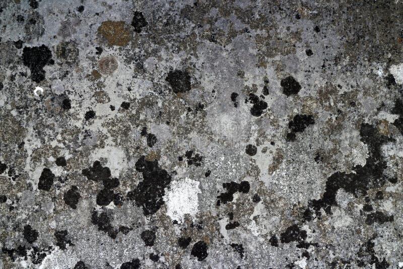 Zakończenie w górę cętkowanej kamiennej ławki pokazuje lamparta jak wzór dalej obraz stock