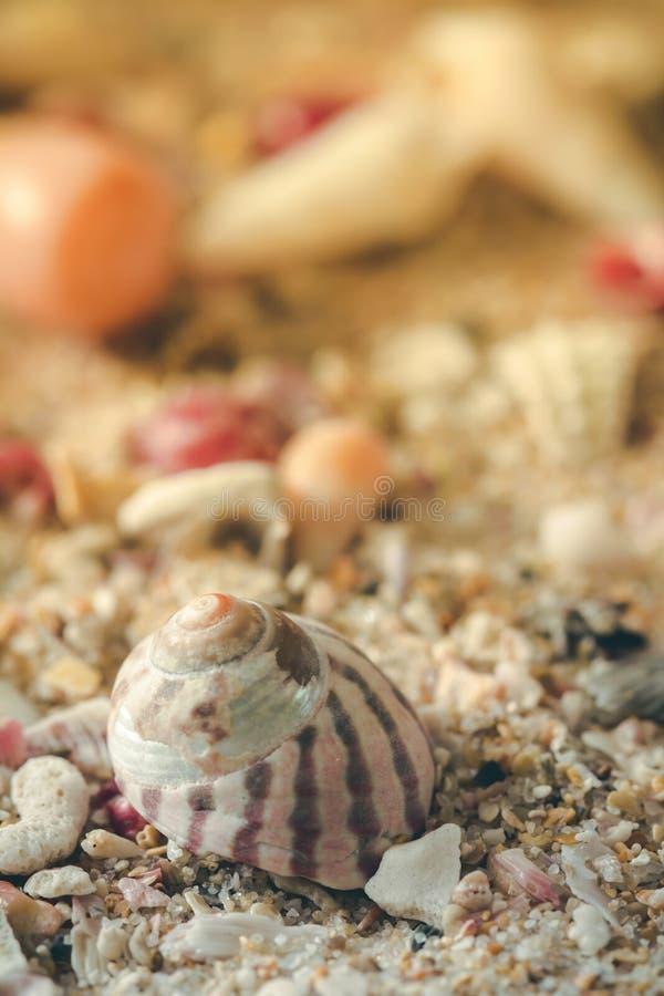 Zakończenie w górę dennej skorupy na dennym piasku zdjęcie royalty free