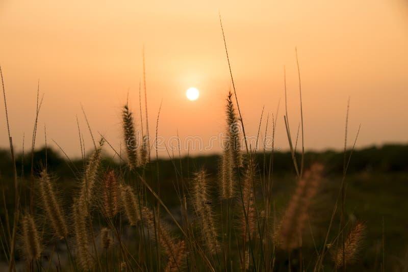 Zakończenie w górę desho trawy i słońce zaświecamy w wieczór czasie fotografia royalty free