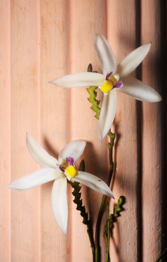 Zakończenie w górę dzikiego storczykowego kwiatu na tekstury tle na niskim świetle obraz royalty free