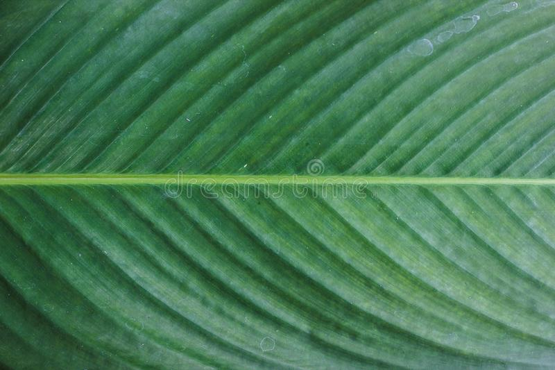 Zakończenie w górę horyzontalnych zielonych liści deseniuje tekstury tło Naturalna fotografia zdjęcie stock