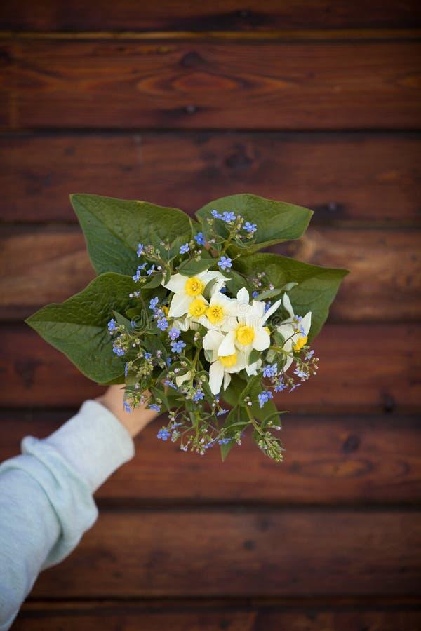 Zakończenie w górę kobiety ręki mienia ogródu kwitnie Piękny wiosna bukiet narcyz, zapomina ja i świezi liście nie zdjęcia royalty free