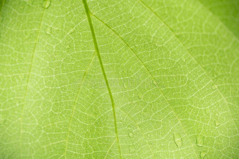 Zakończenie w górę natura widoku zieleni liścia tekstury i wzoru używać jako tło rośliien naturalny krajobraz, ekologii tapety po zdjęcie royalty free