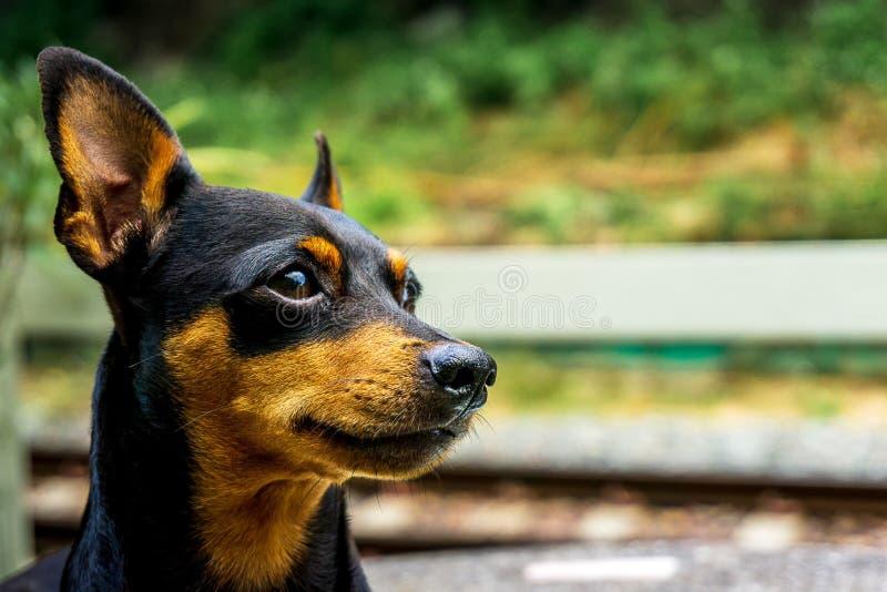 Zakończenie w górę obrazka psia twarz na stronie zdjęcie royalty free