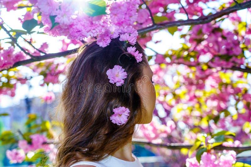 Zakończenie w górę włosy dziewczyna od plecy z menchiami kwitnie w jej włosy z okwitnięcia Sakura drzewem na tle obraz royalty free