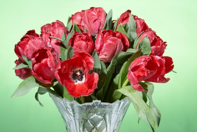 Zakończenie w górę widoku bukiet czerwoni świezi wiosna tulipany z wodą bryzga w wazie zdjęcia stock