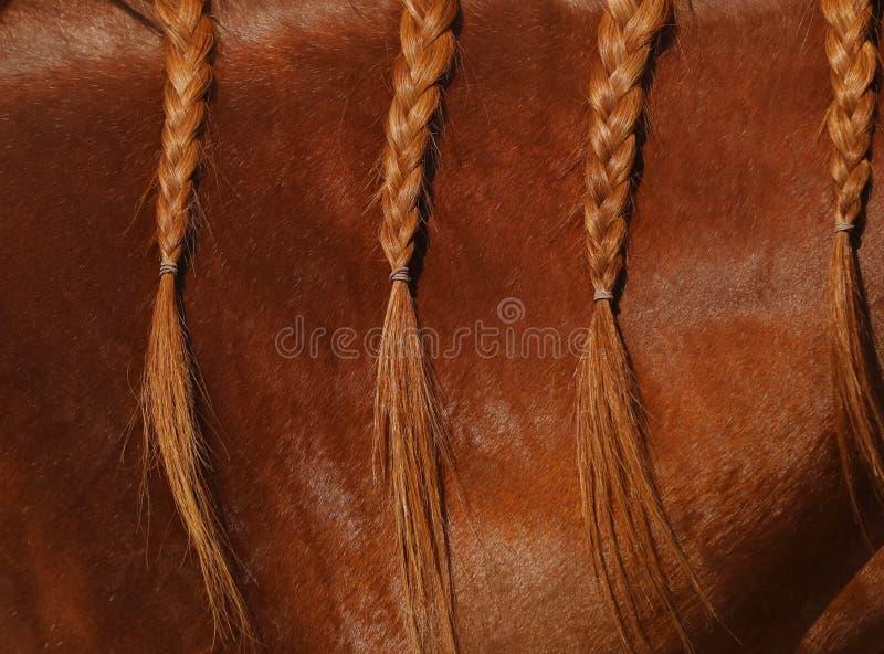 Zakończenie w górę widoku grzywa kobylaka koń w warkoczach zdjęcie royalty free