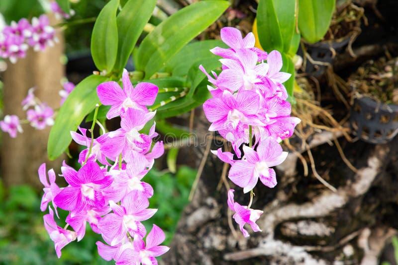 Zakończenie w górę widoku od żółtej orchidei z zieleń liśćmi i bagażnikiem w tle obrazy stock