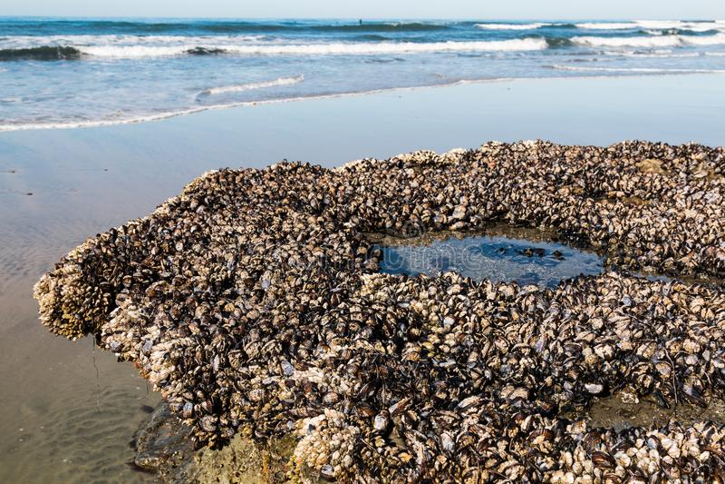 zakończenie widok Skalista rafa Z pąklami przy Swami ` s plażą zdjęcie royalty free