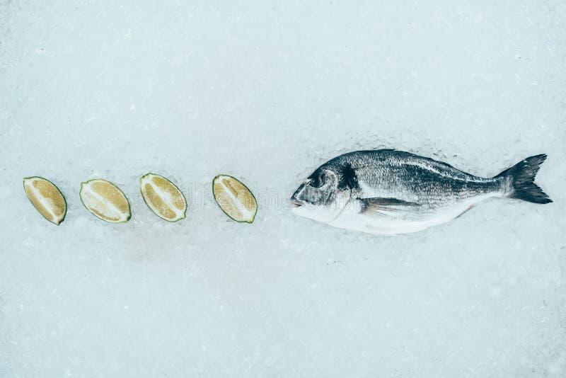 zakończenie widok zdrowi surowi dorado wapna i ryba plasterki zdjęcie royalty free