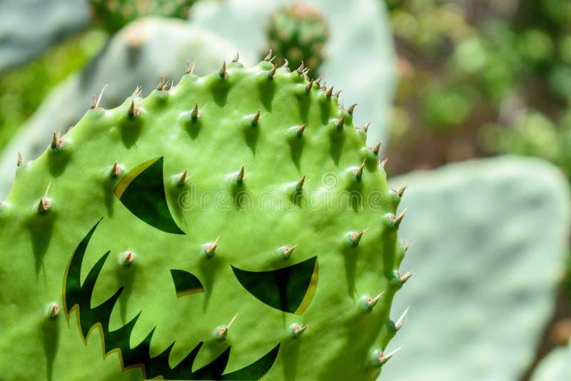 Zakończenie widok zielony kaktusowy liść z Halloweenowym stawia czoło obrazy royalty free