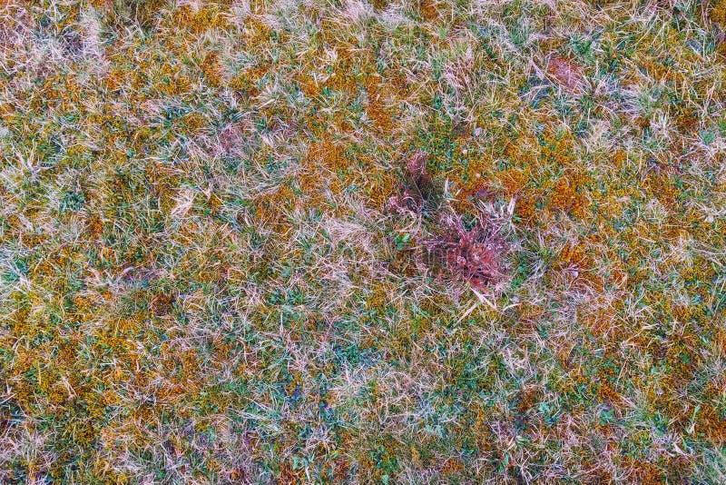 Zakończenie wyszczególniał fotografię jesieni trawa na łąki ziemi zdjęcie stock